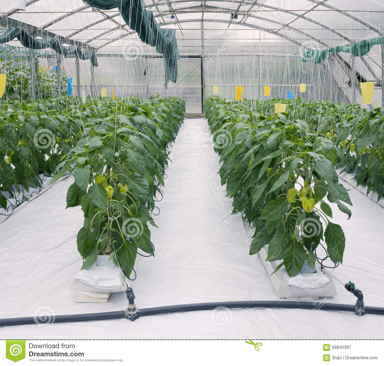 hydroponic food production pdf free download