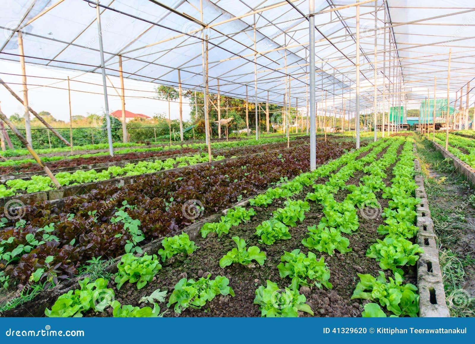 A Sample Vegetable Farming Business Plan Template