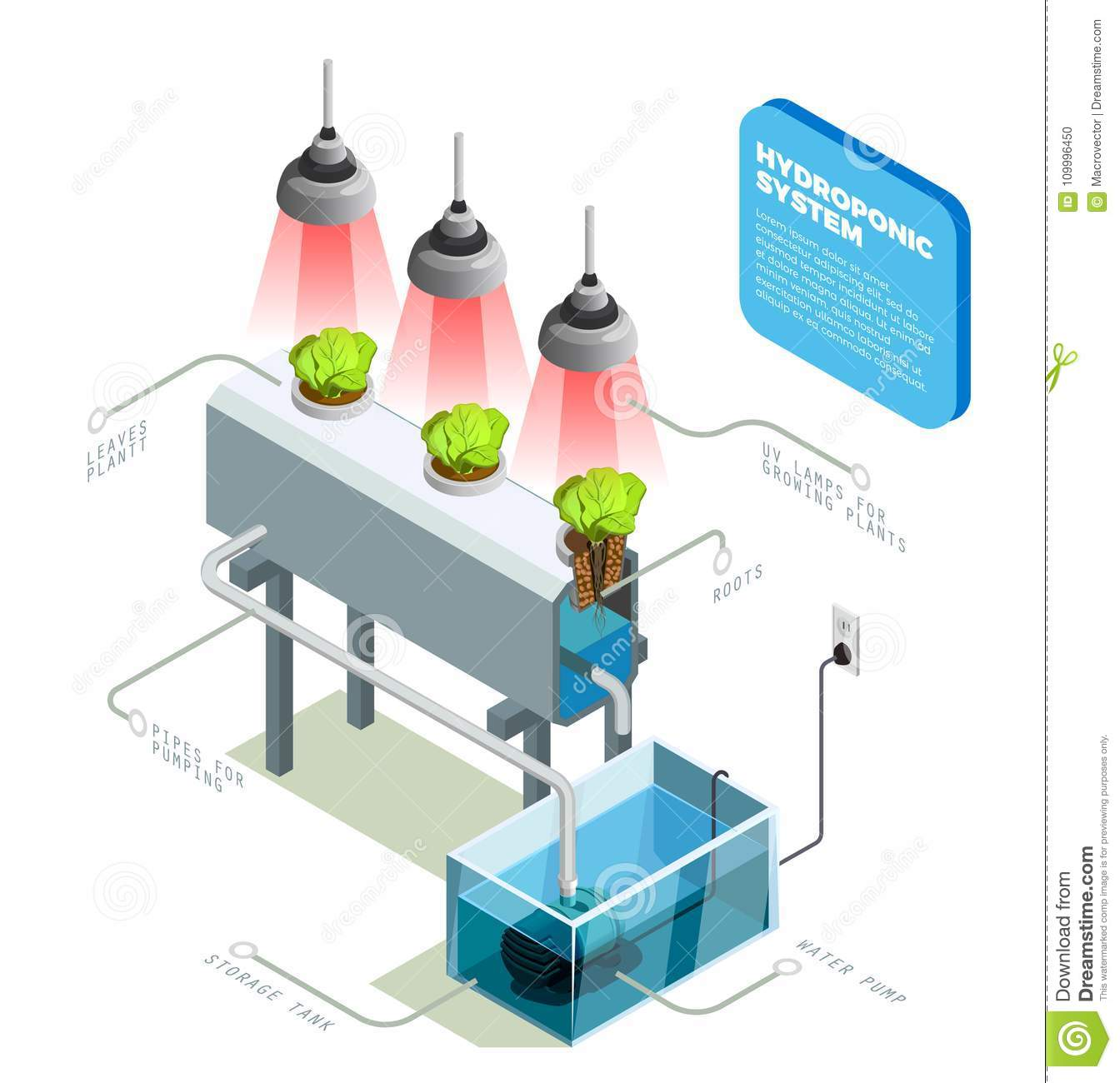 Hydroponic System Infographic Layout Stock Vector