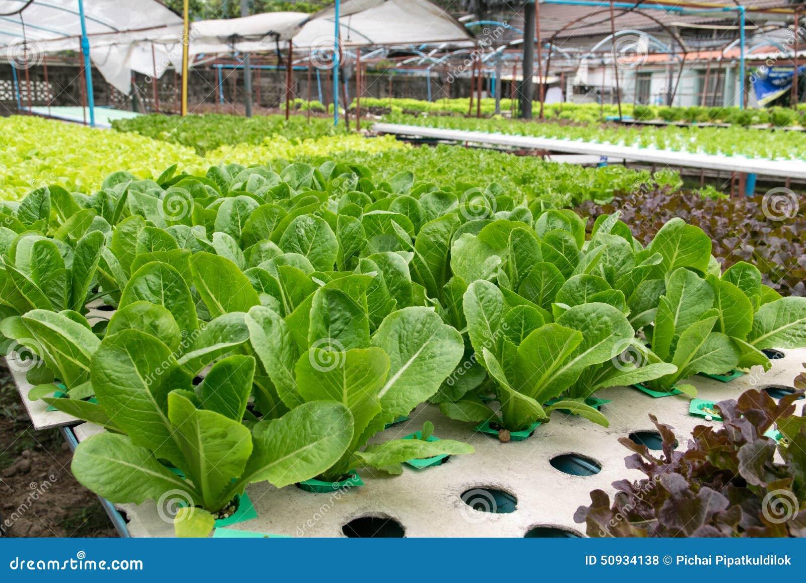 Hydroponic växa för grönsaker i växthus