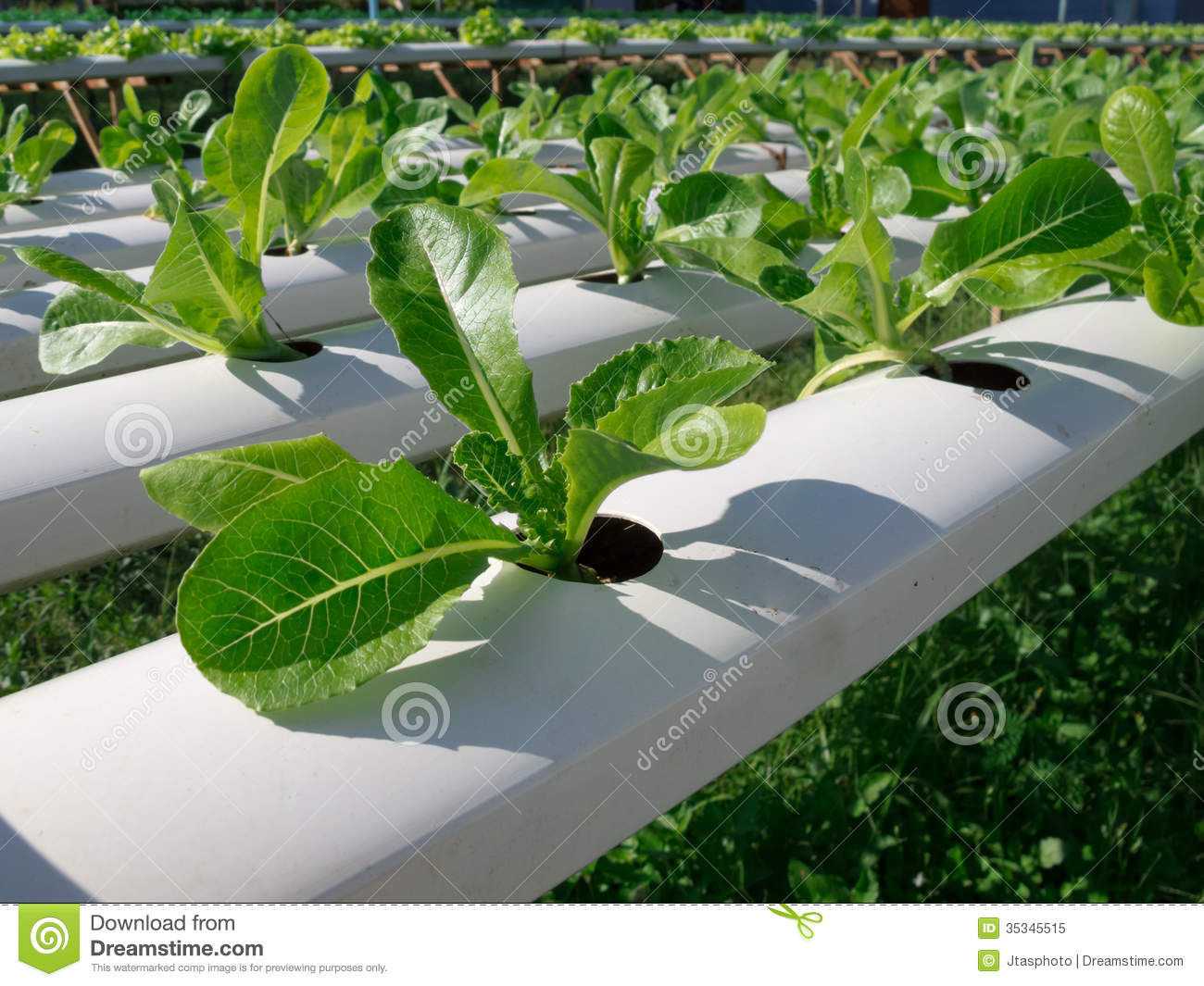 Hydroponic Vegetable In Garden Royalty Free Stock Photo Image