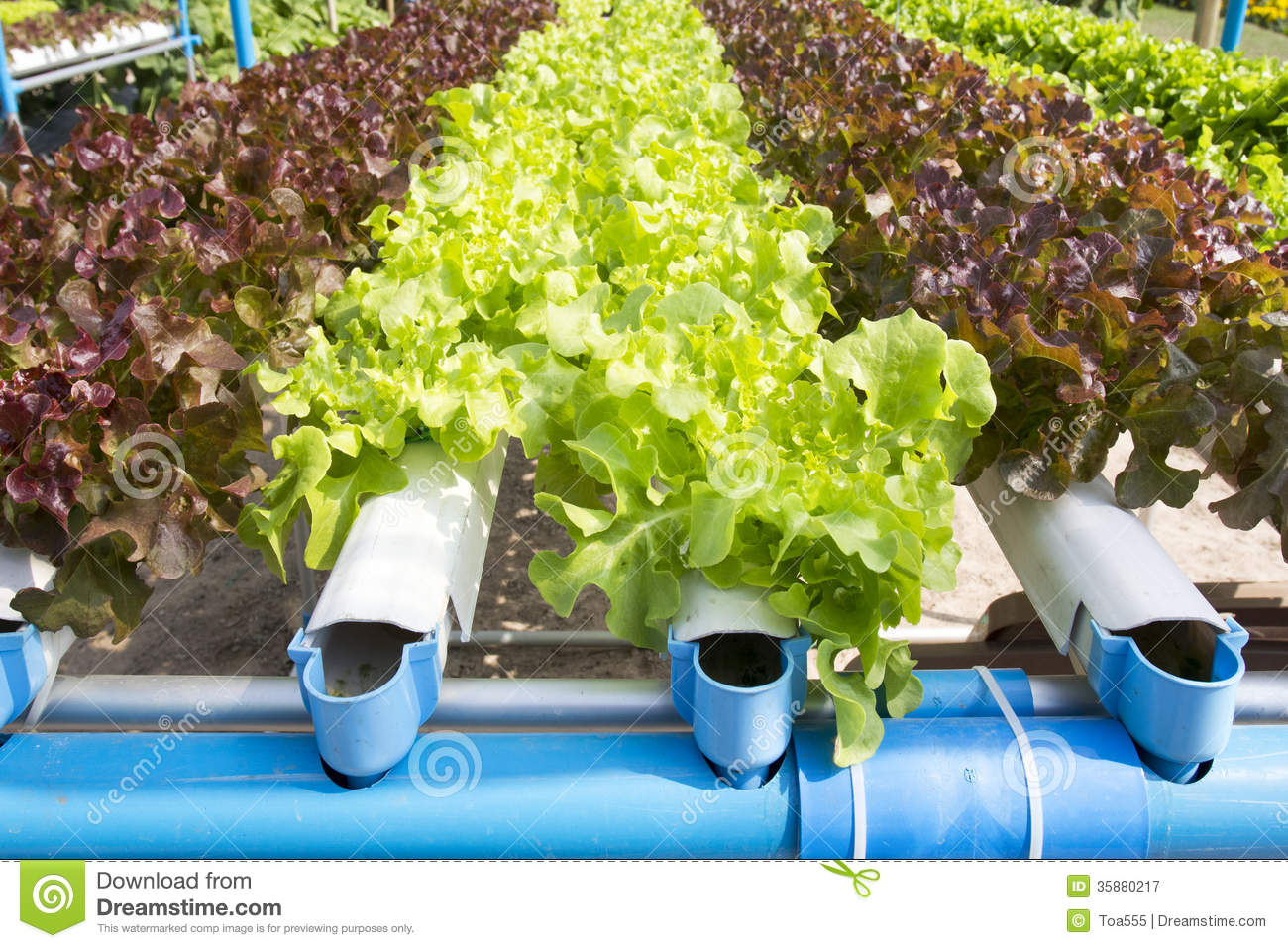 Hydroponic Vegetable Garden Royalty Free Stock Photography Image