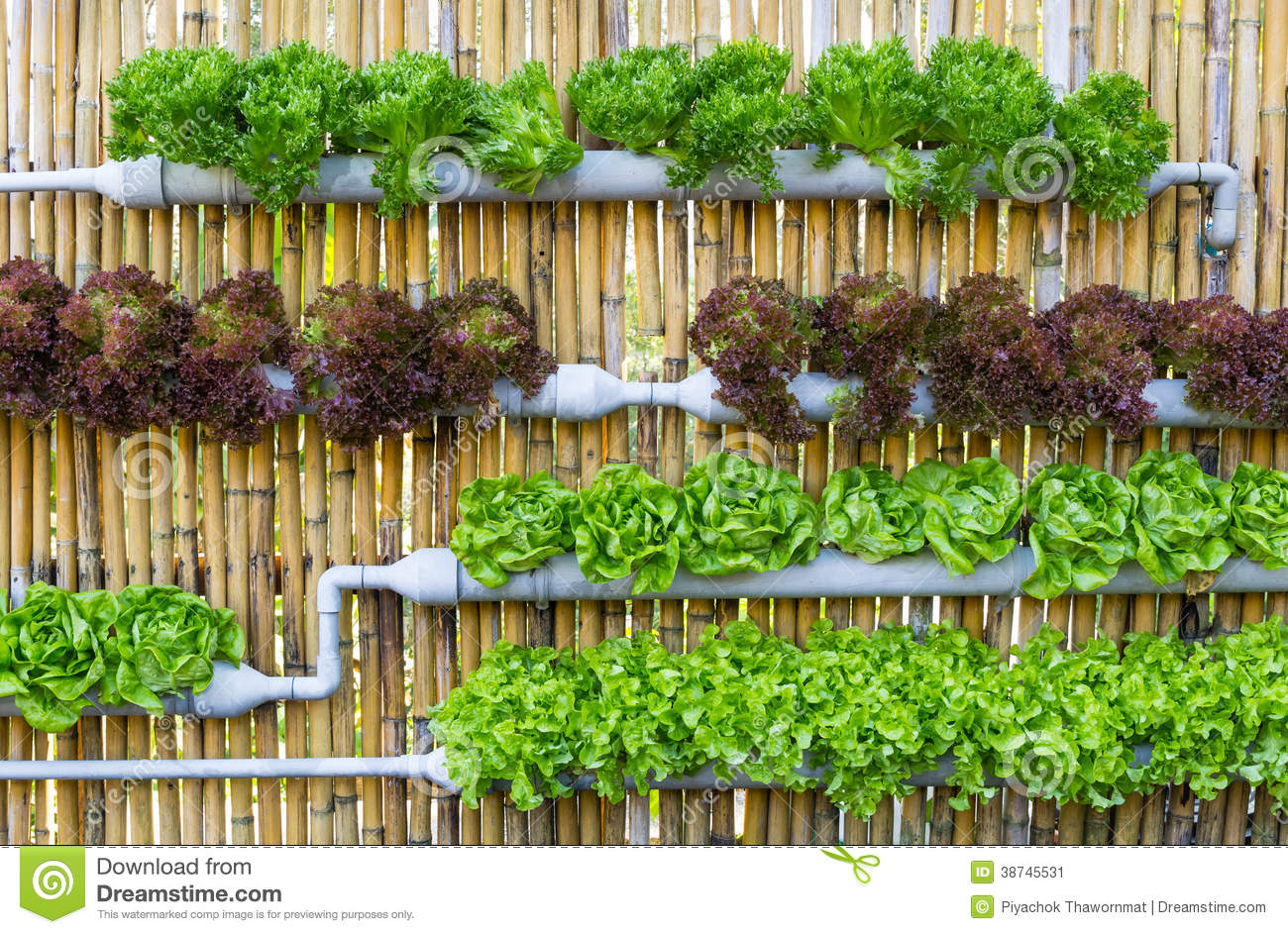 Hydroponic Vertical Gardening Stock Image Image 38745531