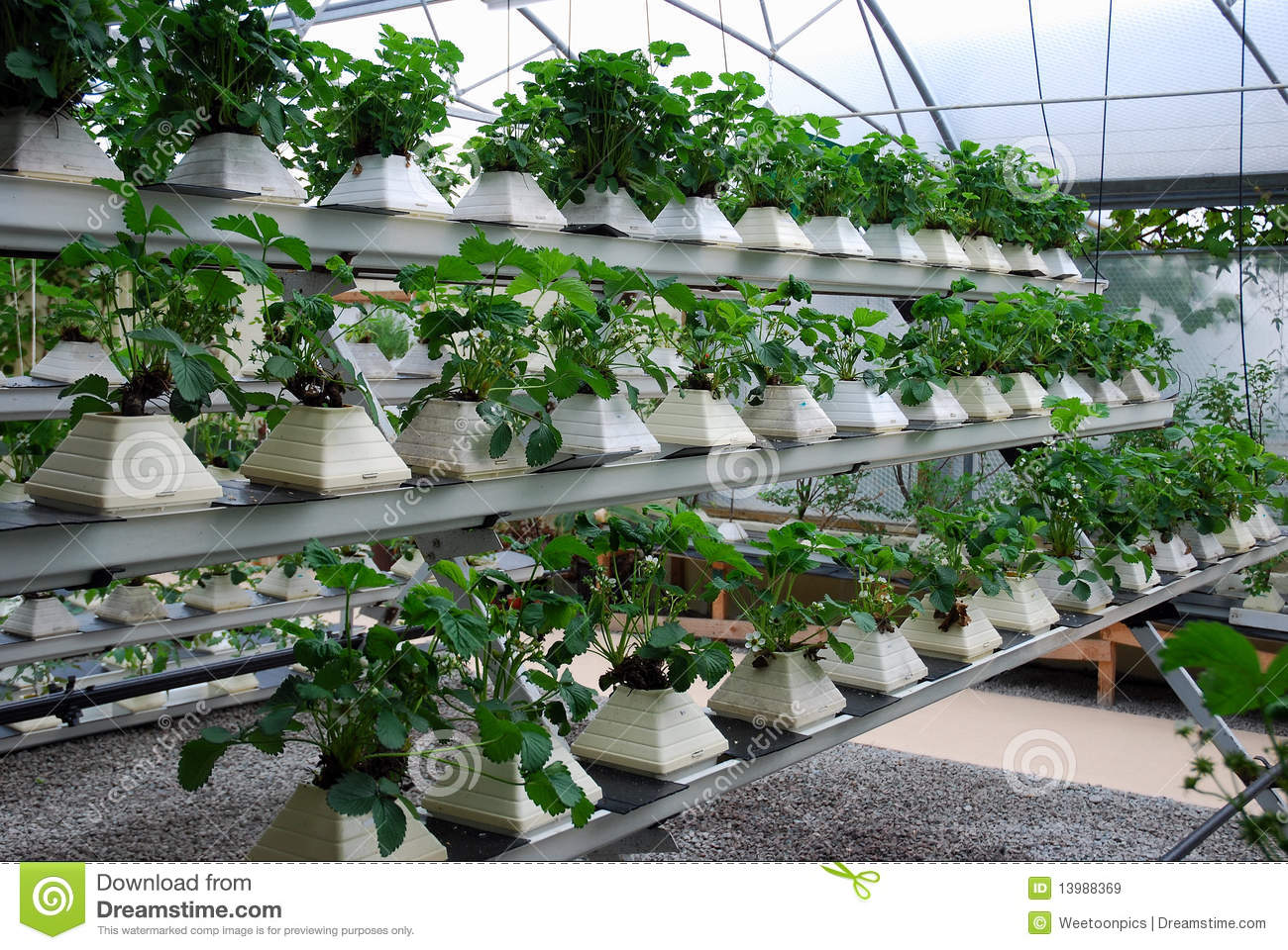 a description of the essentials of hydroponicsgardening without soil Hydroponics is the science of growing plants without soil a person who grows plants delivers the water and nutrients directly to the roots of the plant.