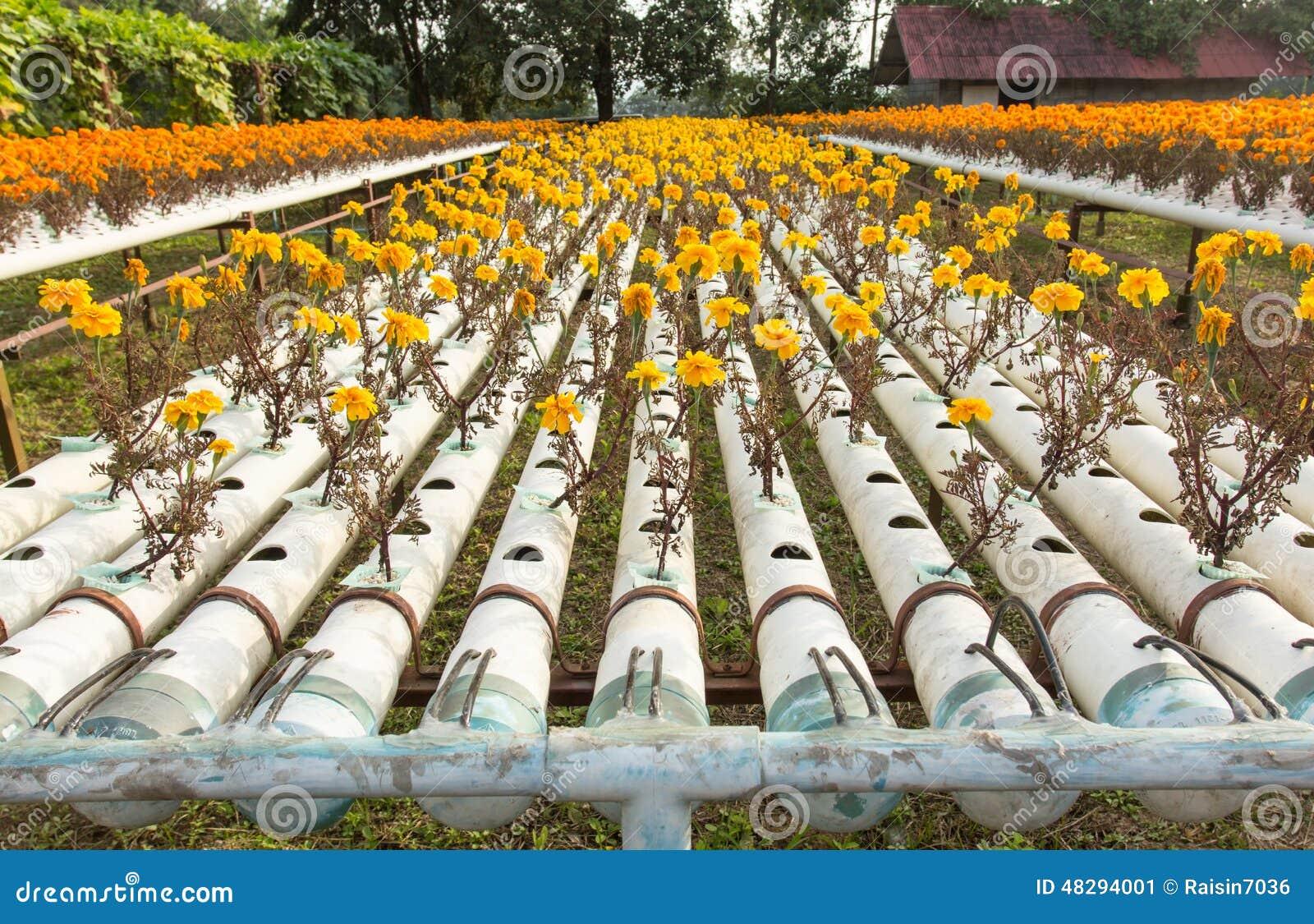 Hydroponic cut flower business plan