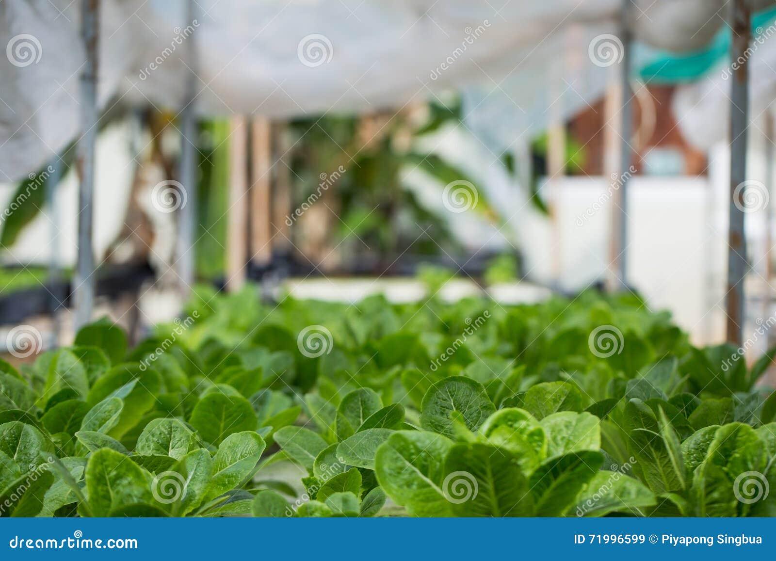 Hydroponics Method Of Growing Plants Stock Image - Image of