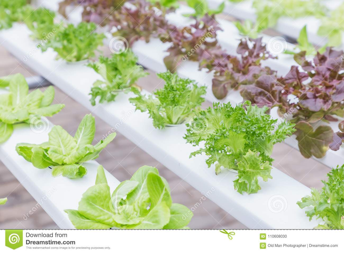 Hydroponics System Greenhouse And Organic Vegetables Salad