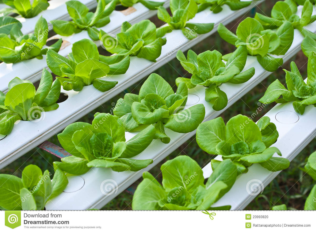 how to grow hydroponic vegetables