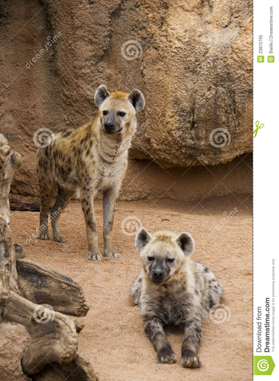 Download Hyena mother and cub stock image. Image of spotted, spots - 23875705