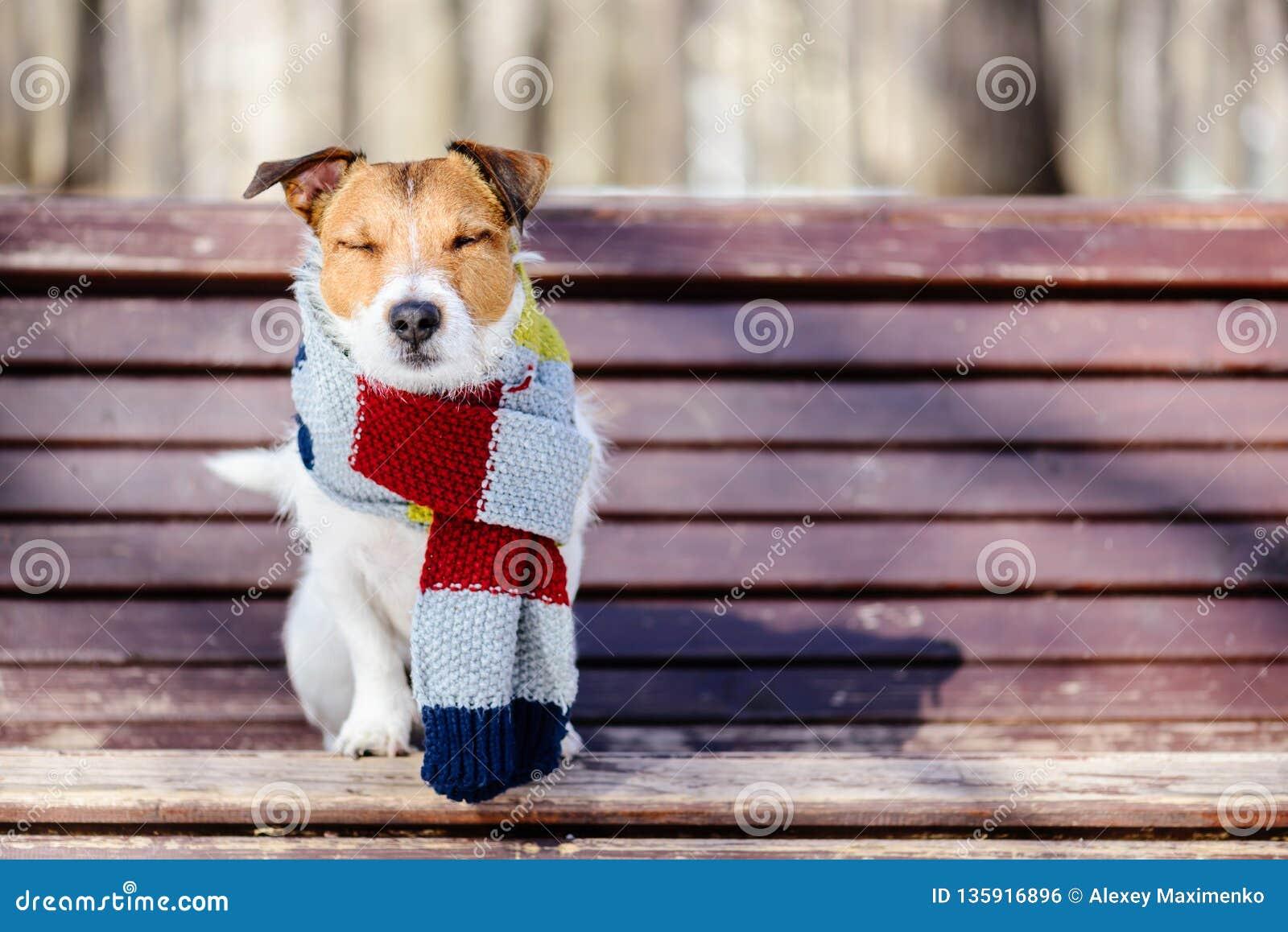 Hygge-Konzept mit dem glücklichen Hund, der gemütlichen warmen Schal trägt