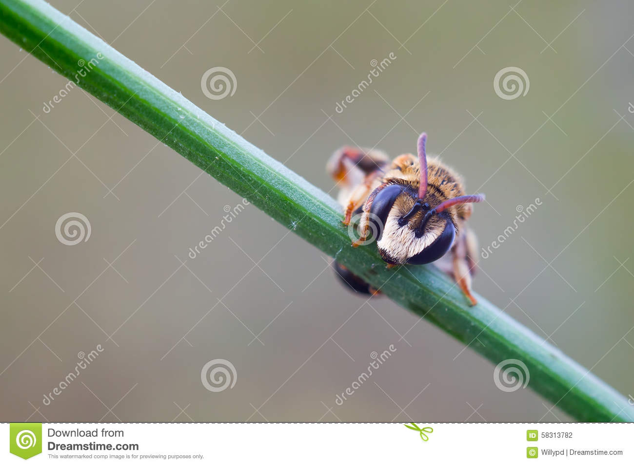 Order a paper wasp
