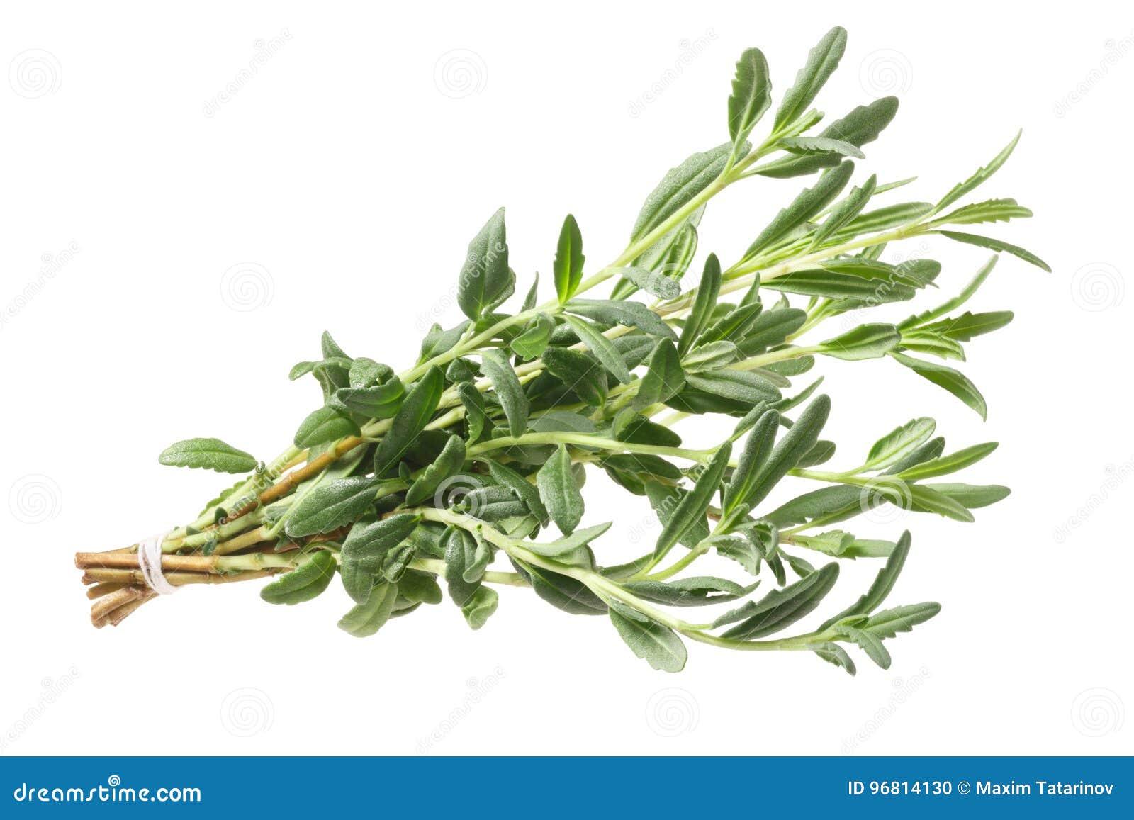 Hyssop Hyssopus officinalis herb, path