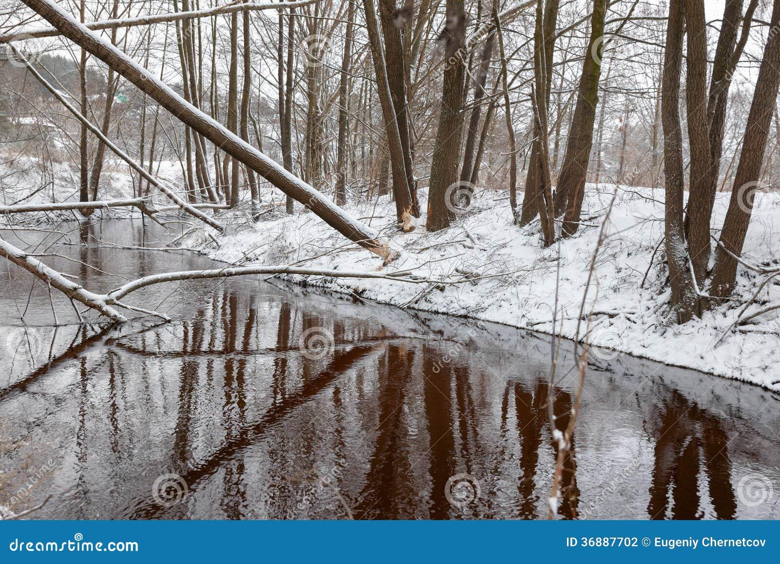 Download I Castori Dell'albero Rosicchiano L'inverno Fotografia Stock - Immagine di chip, animali: 36887702