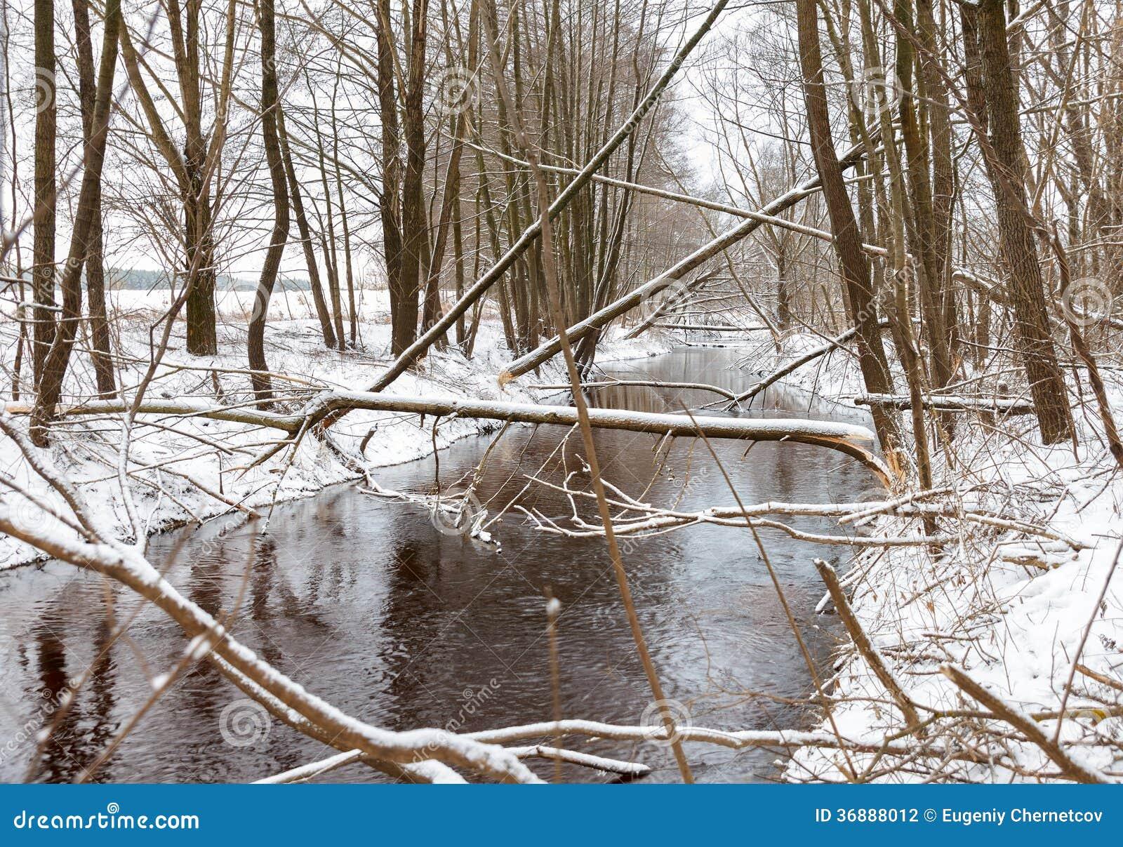 Download I Castori Dell'albero Rosicchiano L'inverno Fotografia Stock - Immagine di danni, hardwood: 36888012