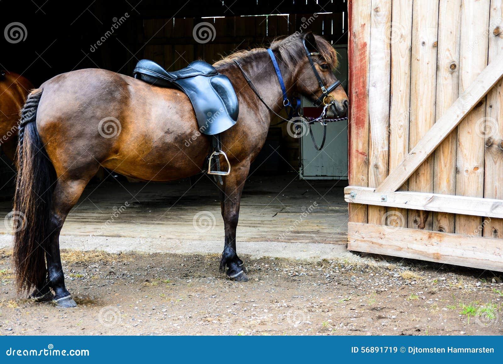 I cavalli dal granaio