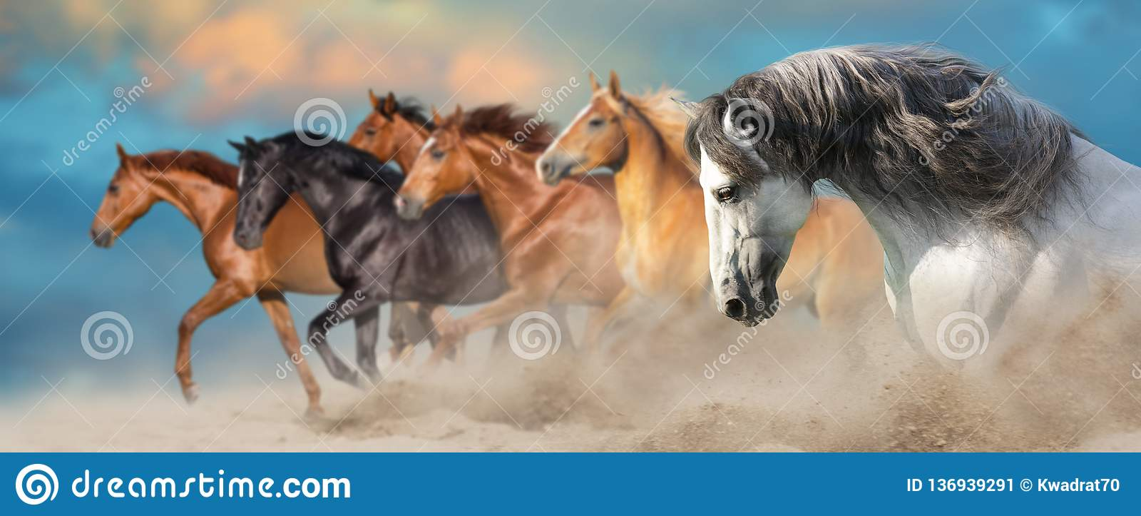 I cavalli si chiudono sul ritratto