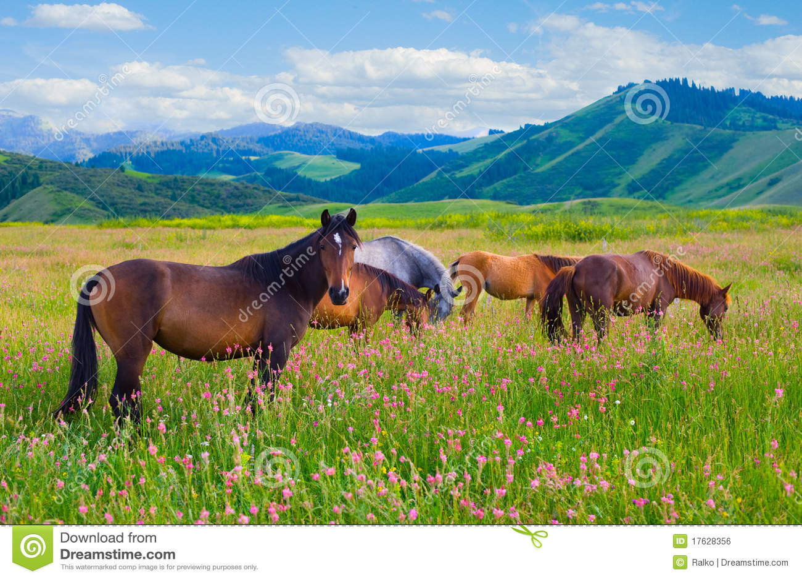 I cavalli sono pascuti su un prato