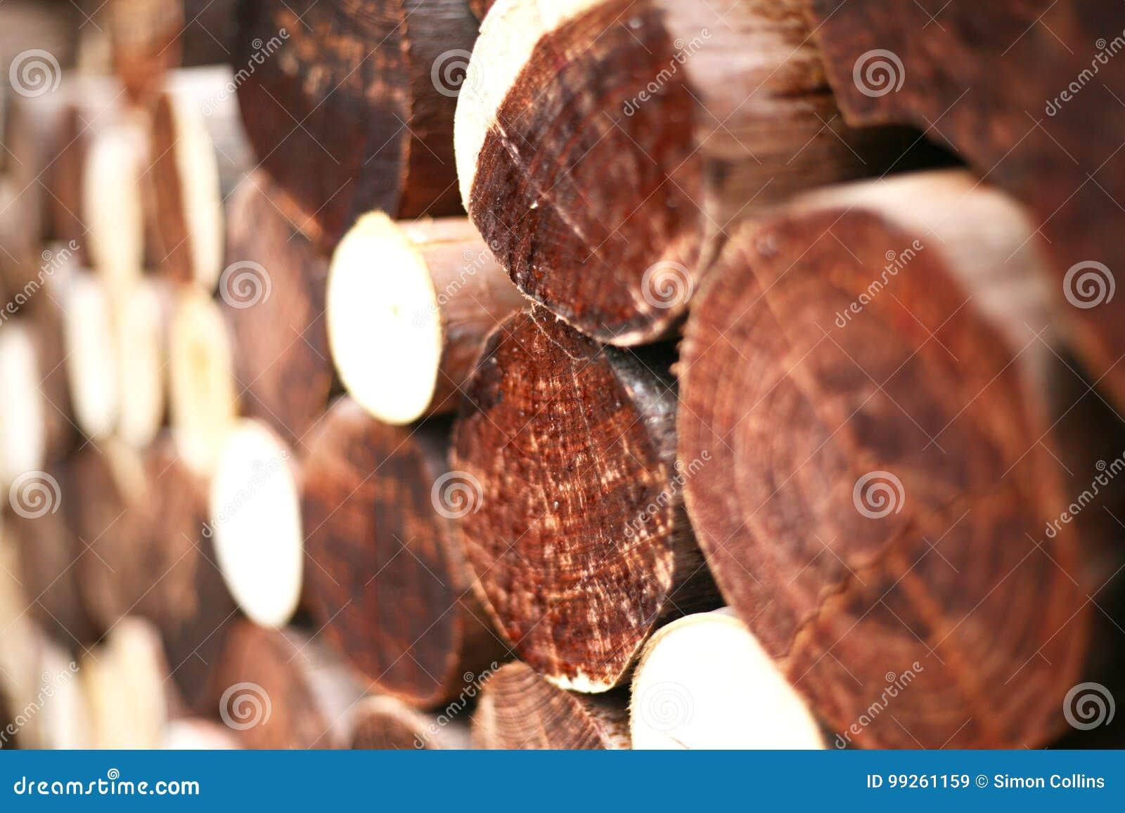 I ceppi del legname dell inverno hanno accatastato il livello