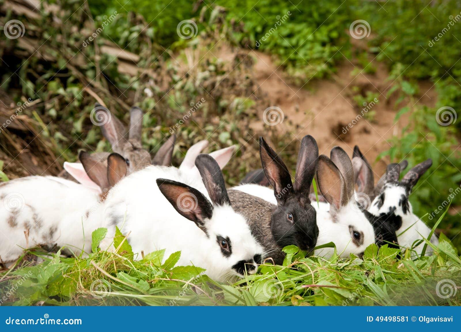 I Conigli Mangiano Lerba Immagine Stock Immagine Di Agricoltura