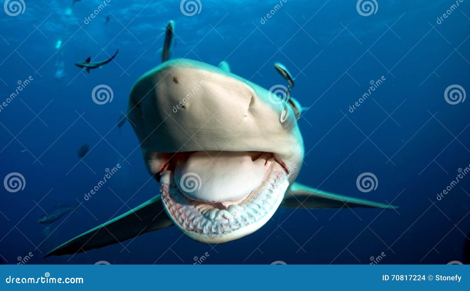 I denti taglienti dello squalo