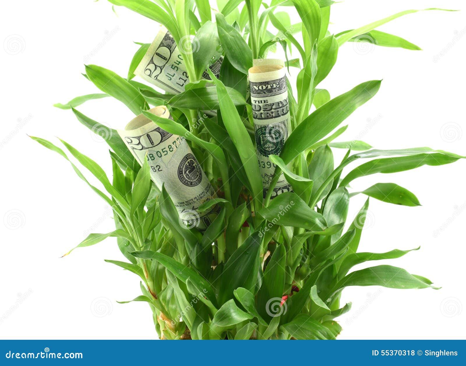 I dollari americani in foglie della pianta verde, concetto di ottenere i dividendi o i ritorni dai vostri soldi, lo investono per