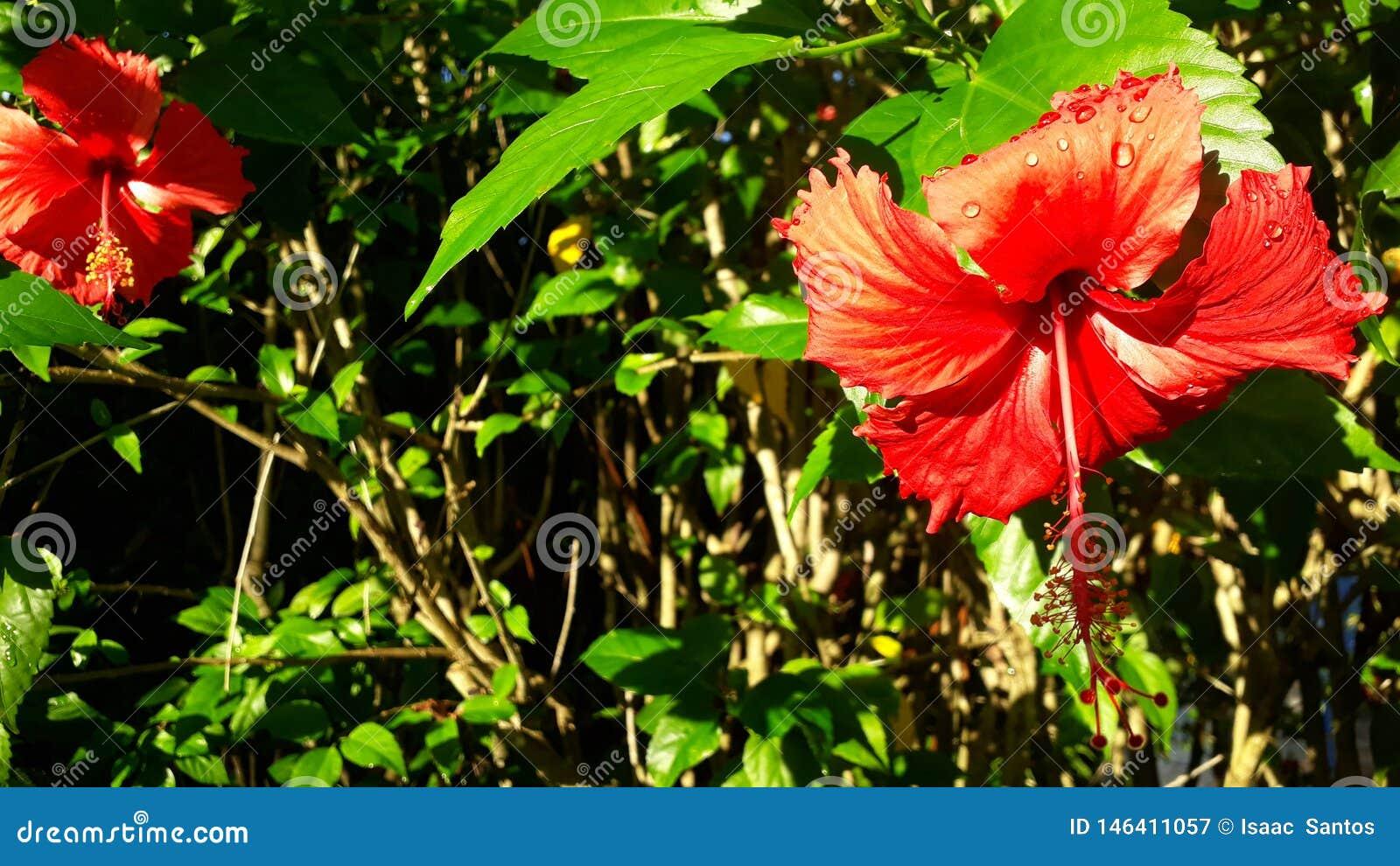 Red or orange flowers? Raindrops or sunlight?