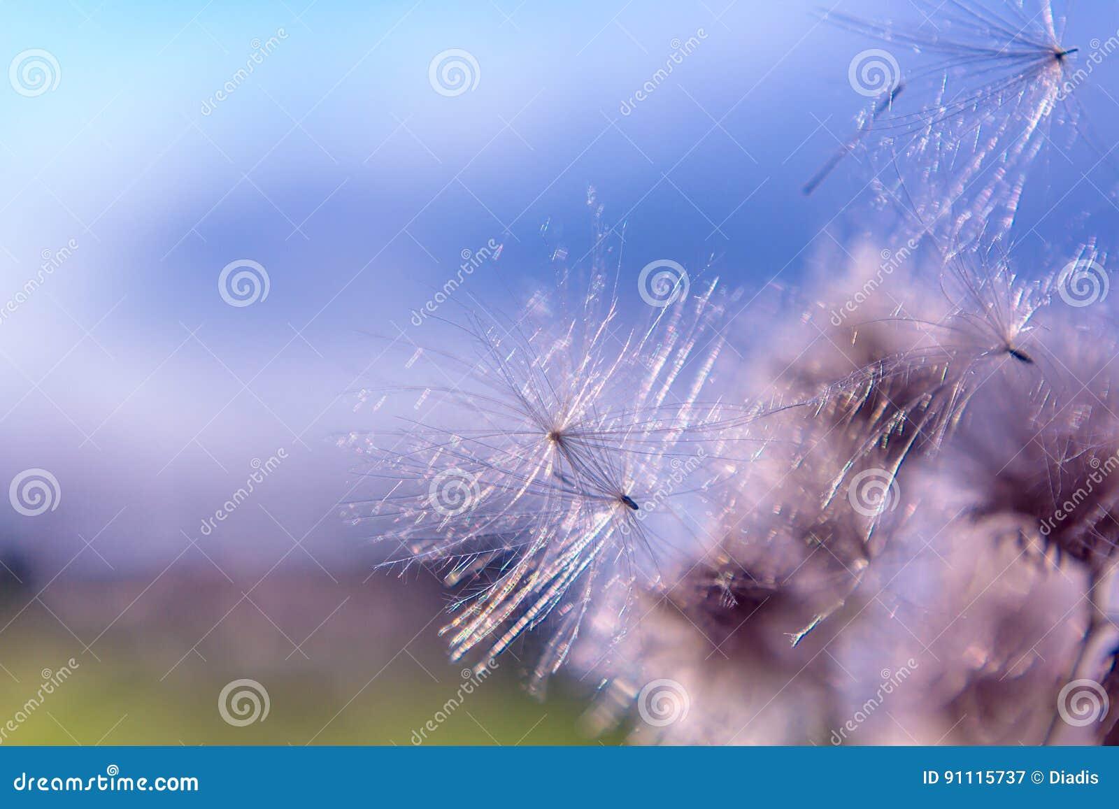 I fiori a filigrana astratti della natura si chiudono su