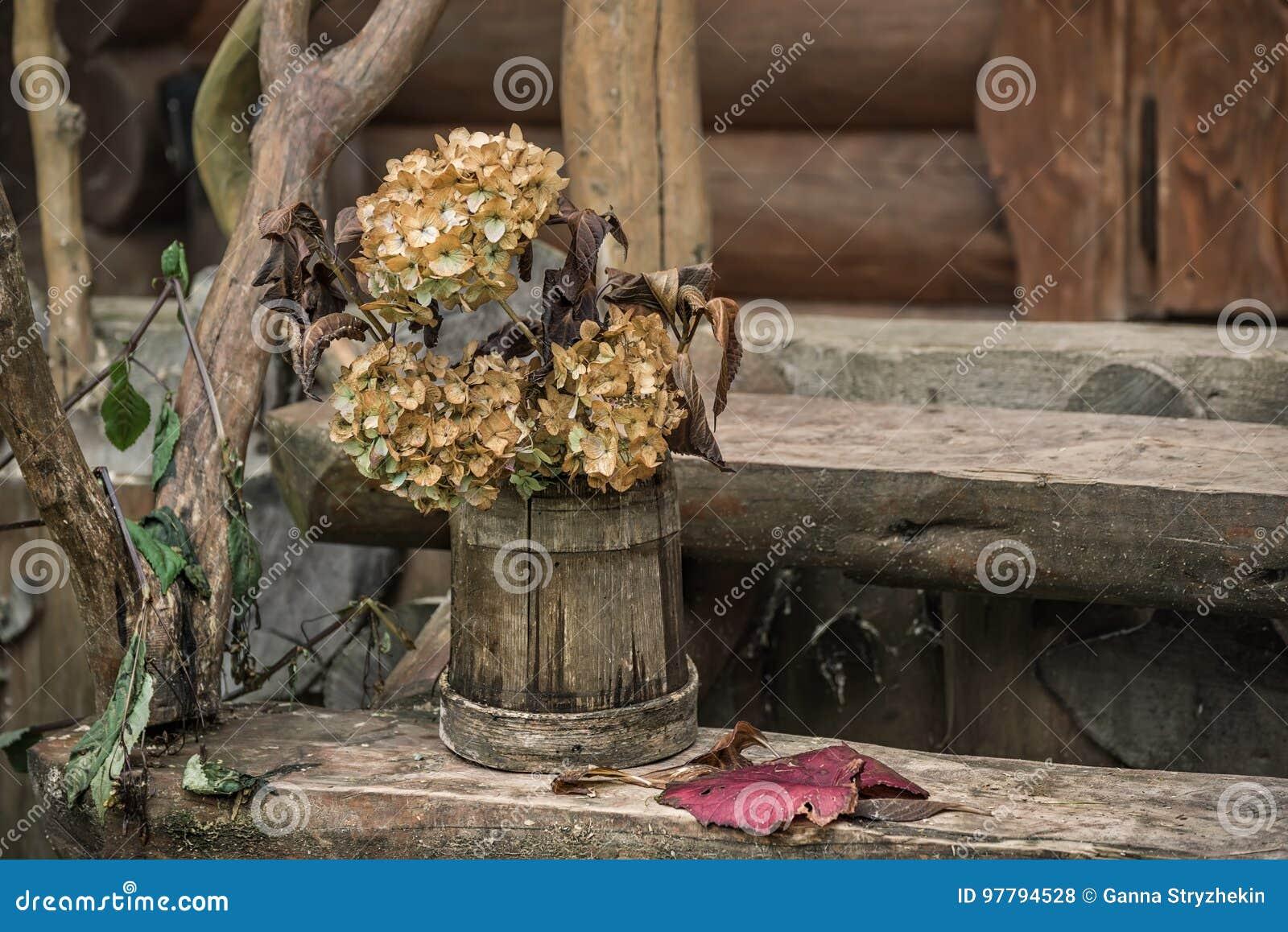 Fiori Di Ortensia Secchi i fiori secchi delle ortensie in un secchio di legno ruvido