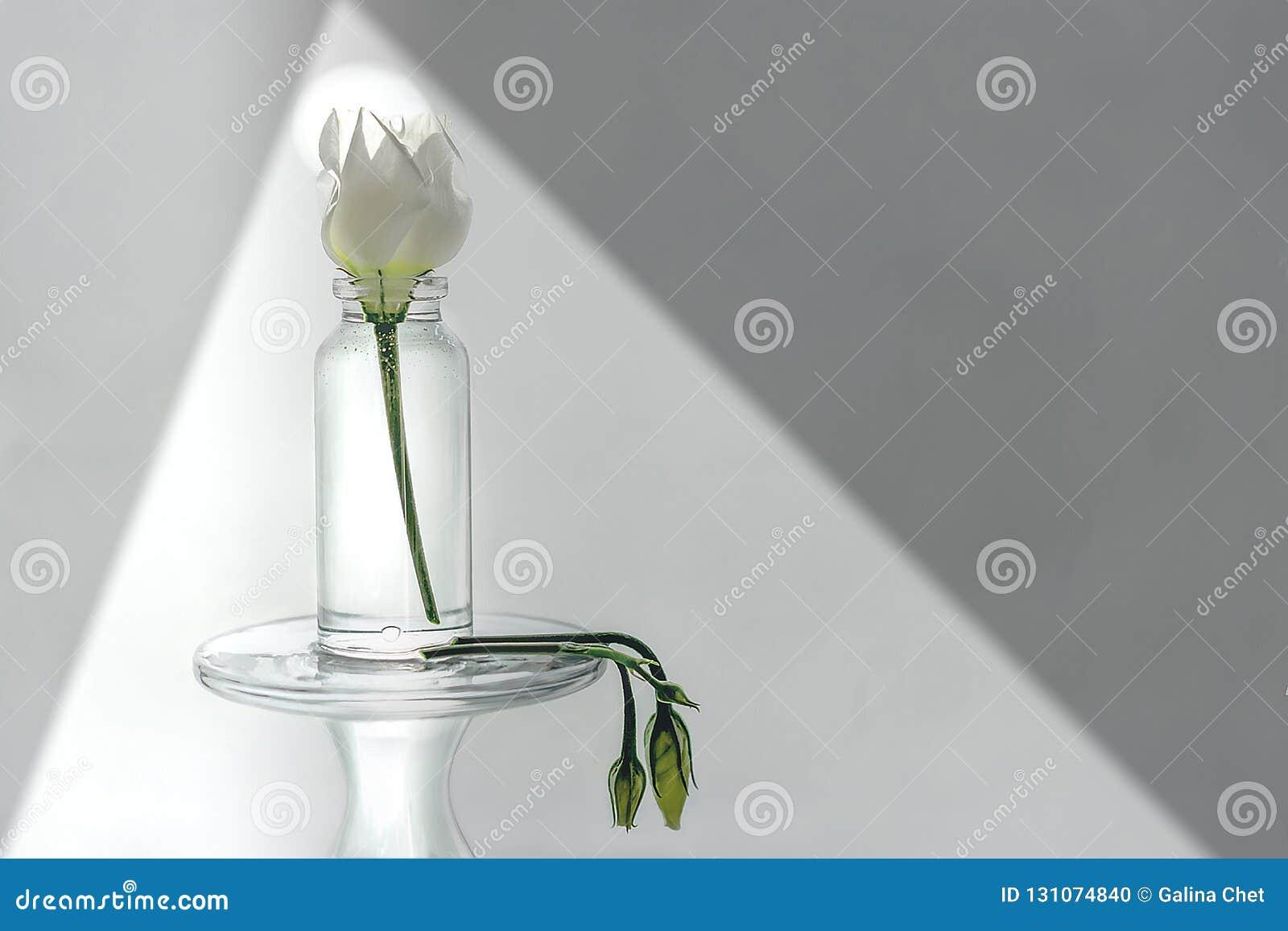 Mazzo Di Fiori Senza Acqua.I Fiori Senza Acqua E Luce Non Hanno Vita Su Terra Fotografia