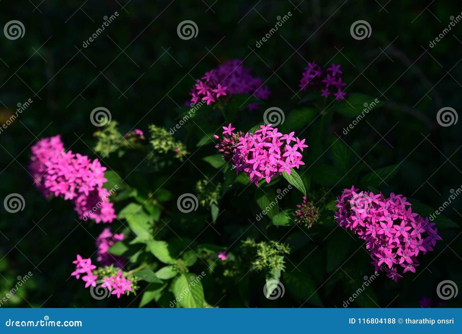 I fiori stanno fiorendo nella stagione riproduttiva