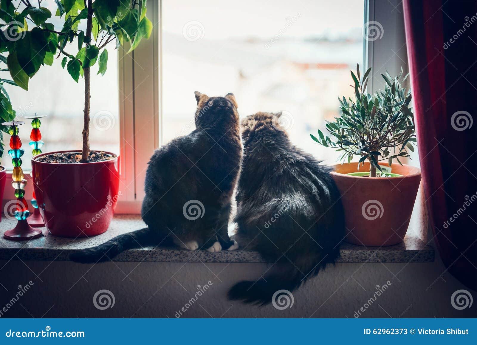 I gatti si siede sul davanzale della finestra e sullo - Davanzale interno finestra ...