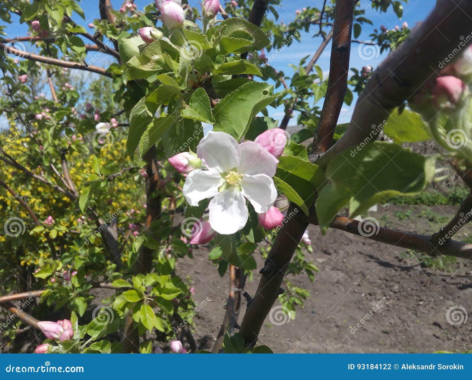 Giardini in fiore in liguria a villa pergola casafacile