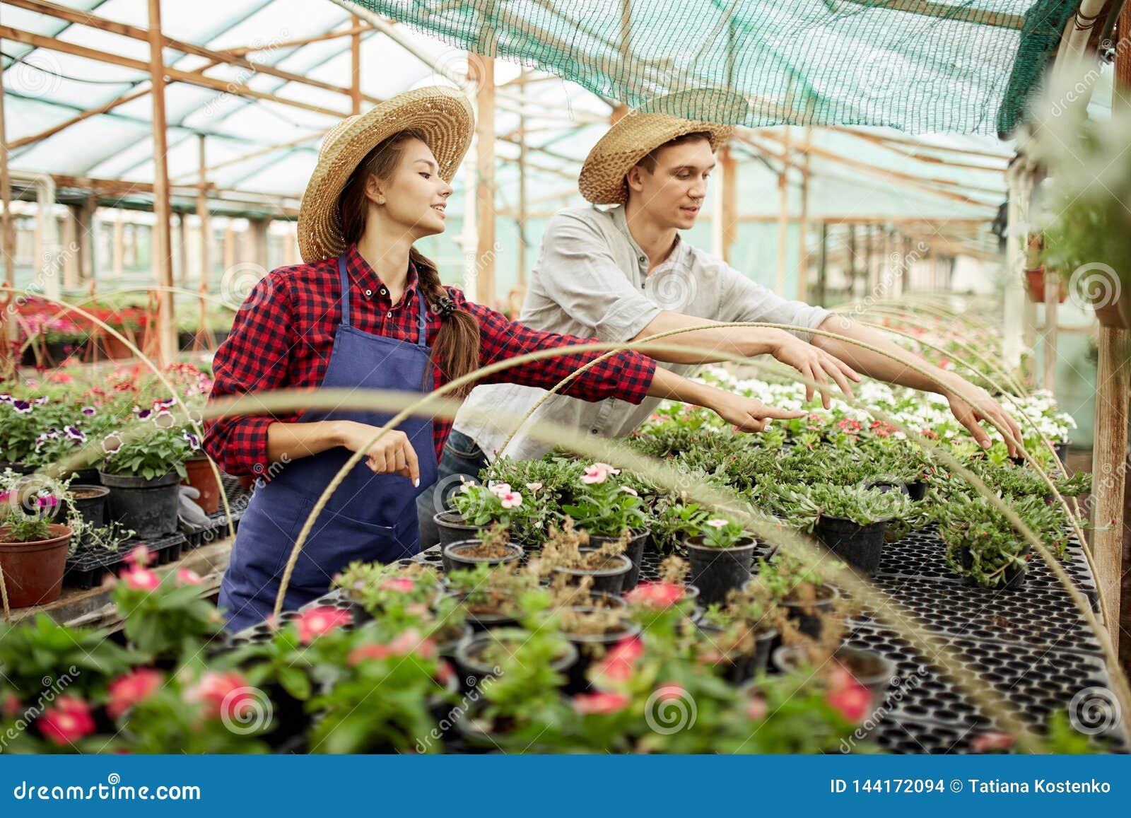 I giardinieri della ragazza e del tipo in cappelli di paglia scelgono i vasi con le piantine del fiore in serra un giorno soleggi