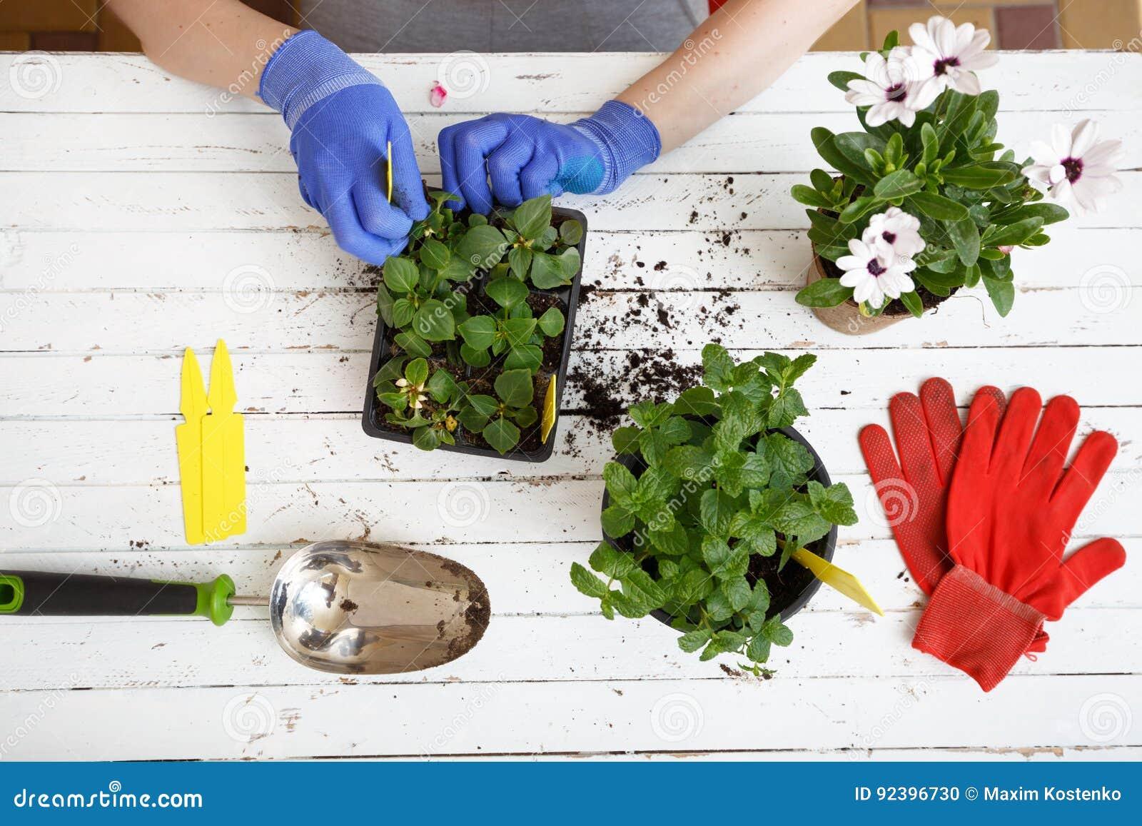 I giardinieri passa la piantatura dei fiori nel giardino, fine sulla foto