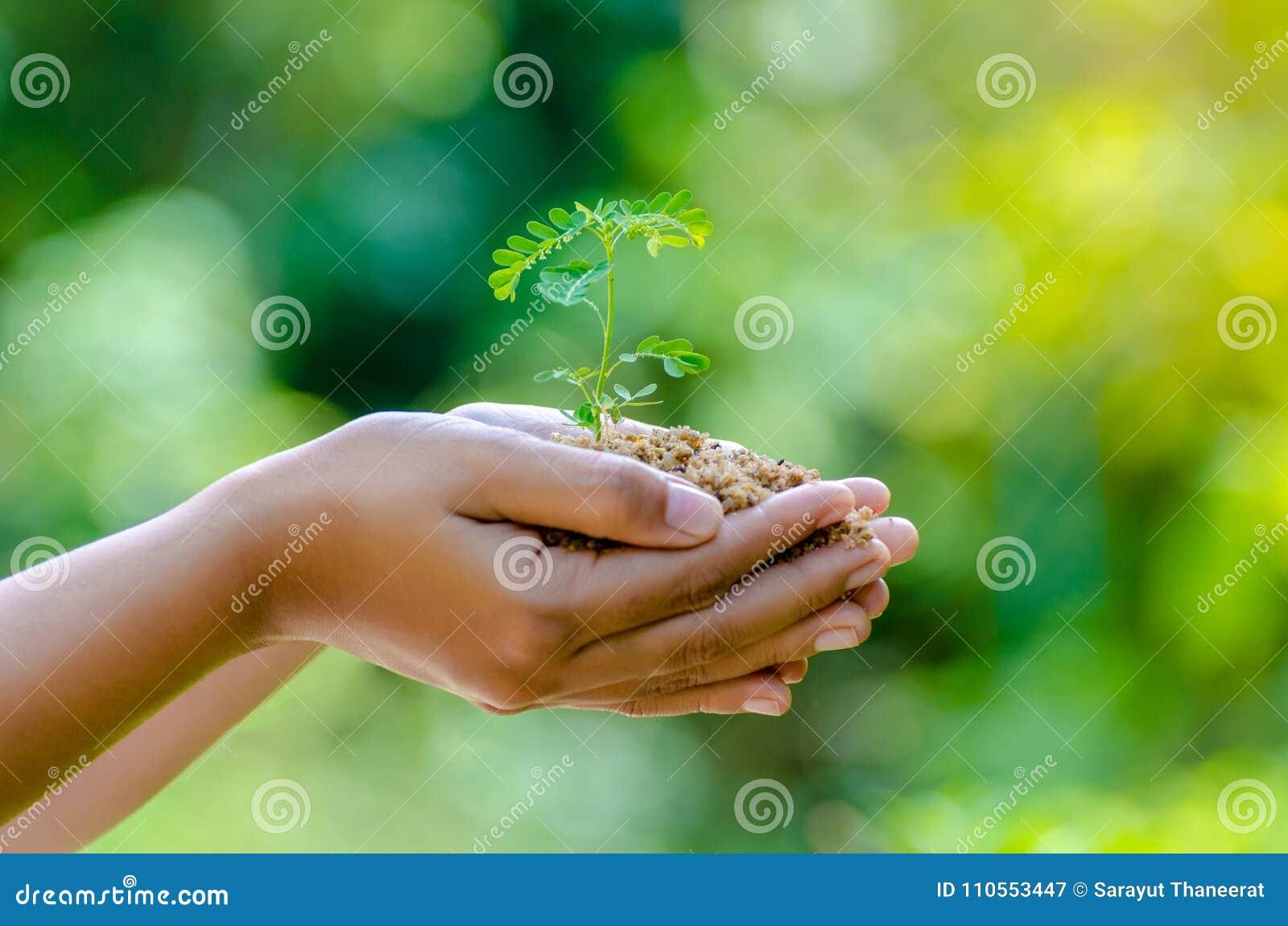 I händerna av träd som växer plantor Bokeh gör grön skogsvård för gräs för fält för natur för träd för kvinnlig hand för bakgrund