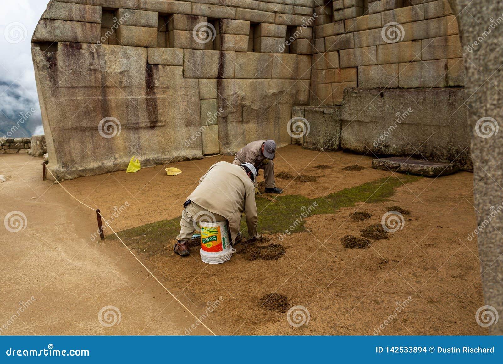 I lavoratori di manutenzione rimuovono il muschio verde indesiderato a Macchu Picchu, quindicesimo del marzo 2019