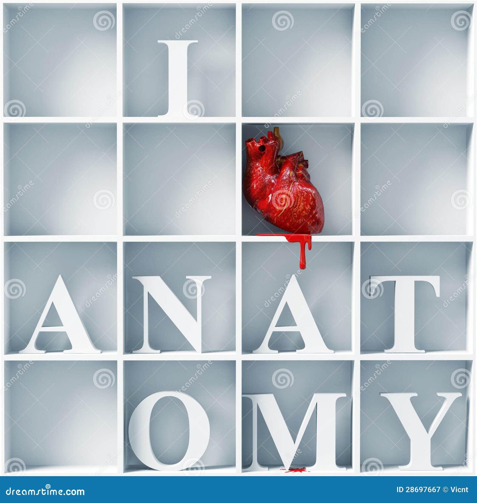 I Love Anatomy Stock Illustration Illustration Of Body 28697667