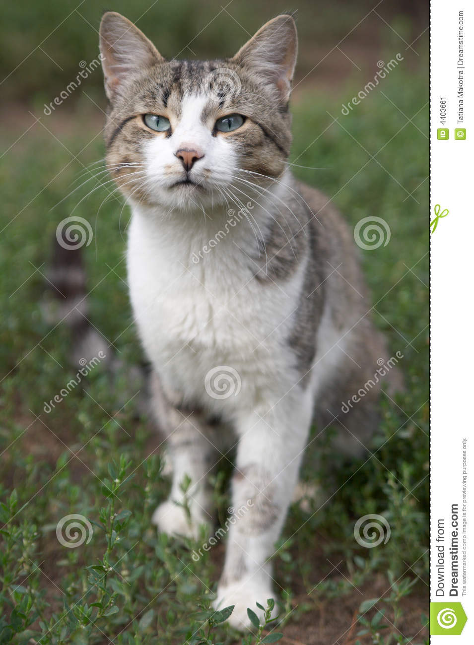 I Love Cats Stock Image Image 4403661