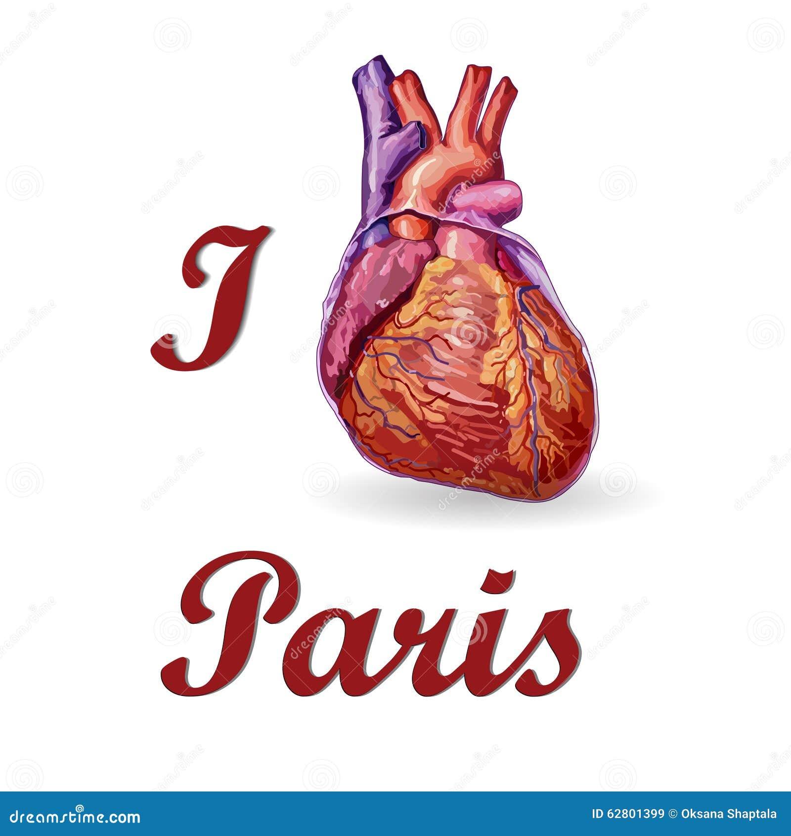 I Love Paris Human Heart Vector Stock Vector Illustration Of