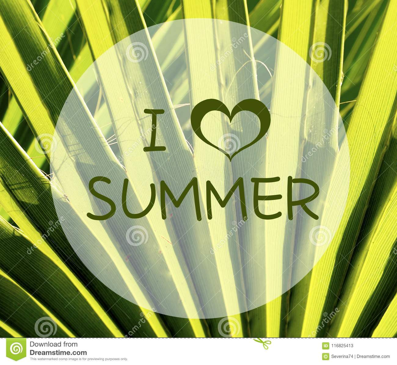 I Love Summer Quote On A Green Tropical Palm Tree Leaves Background