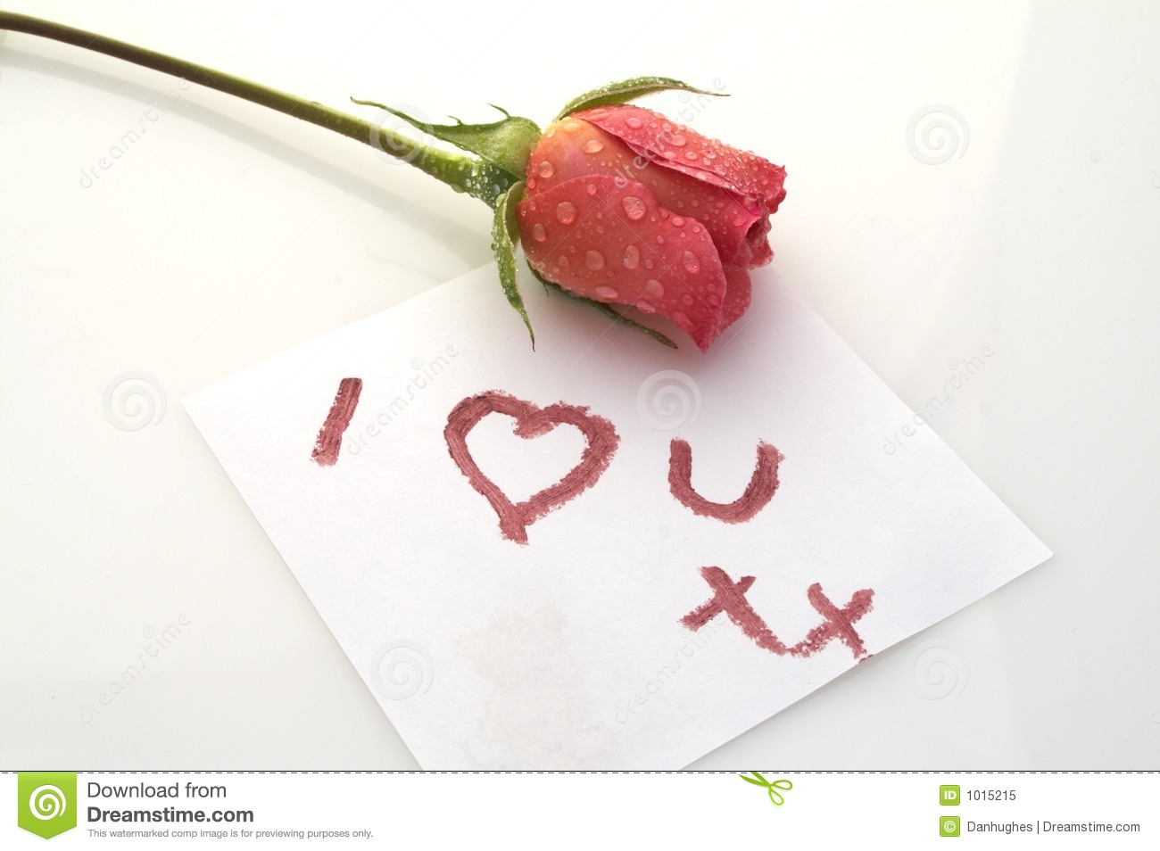 Love You Rose Royalty Free Stock Photo - Image: 1015215