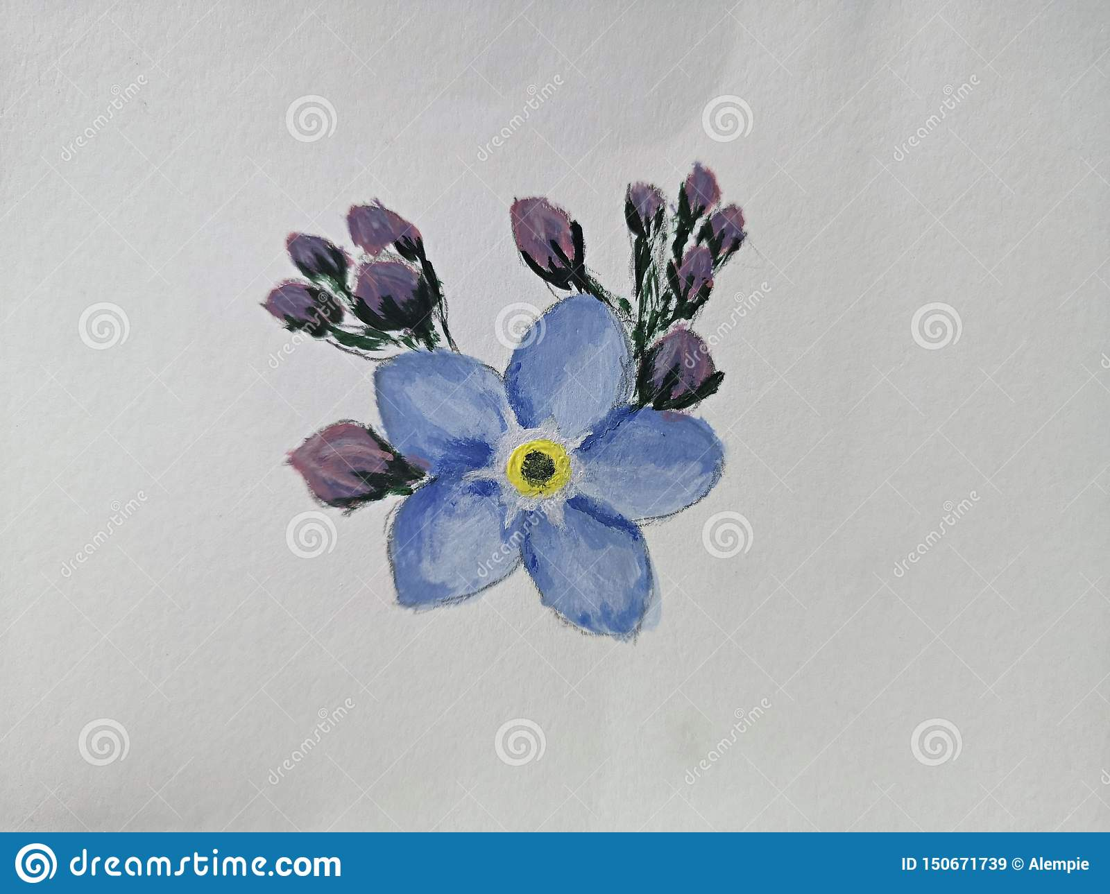 Forget Me Not Flowers Illustration Watercolor On Paper Stock Image Image Of Flora Draw 150671739