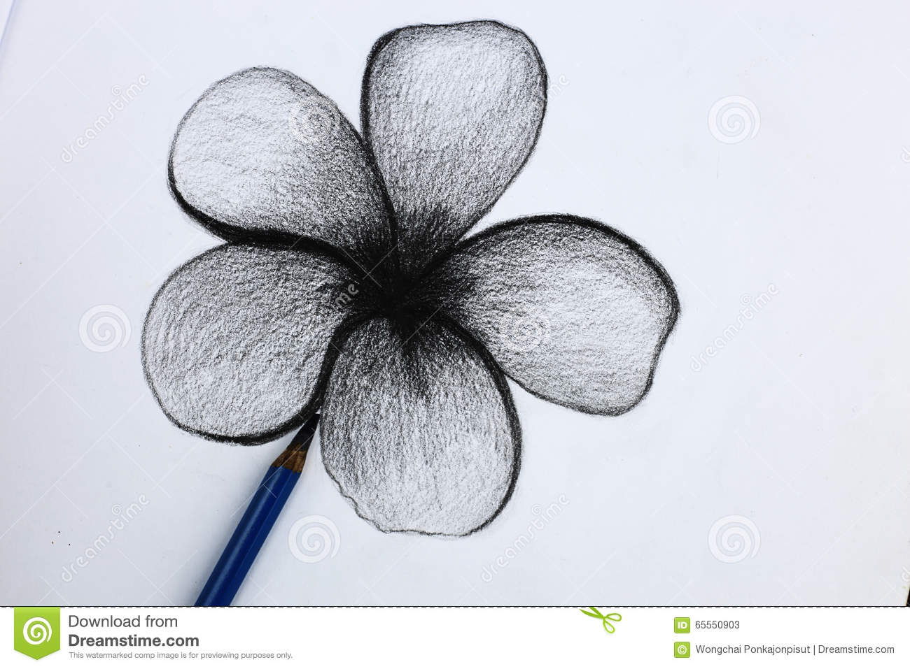 I pencil drawing of flowers stock image image of paper closeout i draw pictures of flowers from a pencil on white paper mightylinksfo