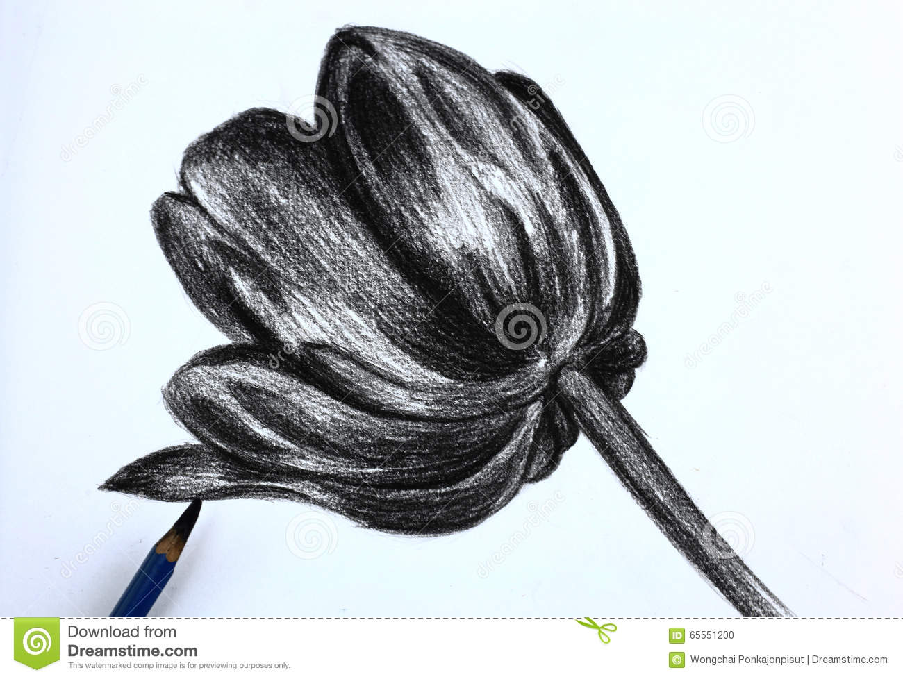 i pencil drawing of flowers stock photo image of paper brown