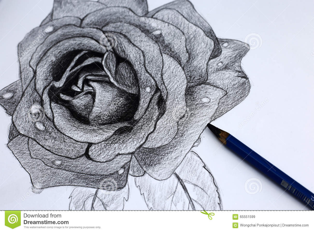 i pencil drawing of flowers stock image image of abstract paper