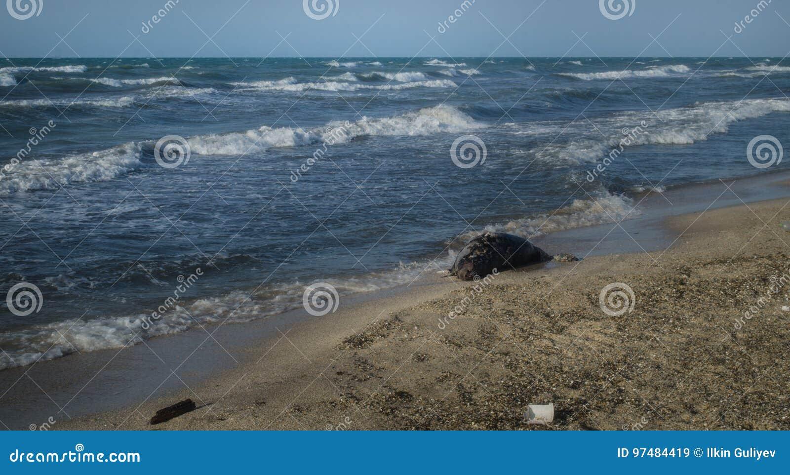 I pesci guasti sull immagine della spiaggia? hanno montato con il simbolo decorato di biohazard Mar Caspio di concetto di inquina