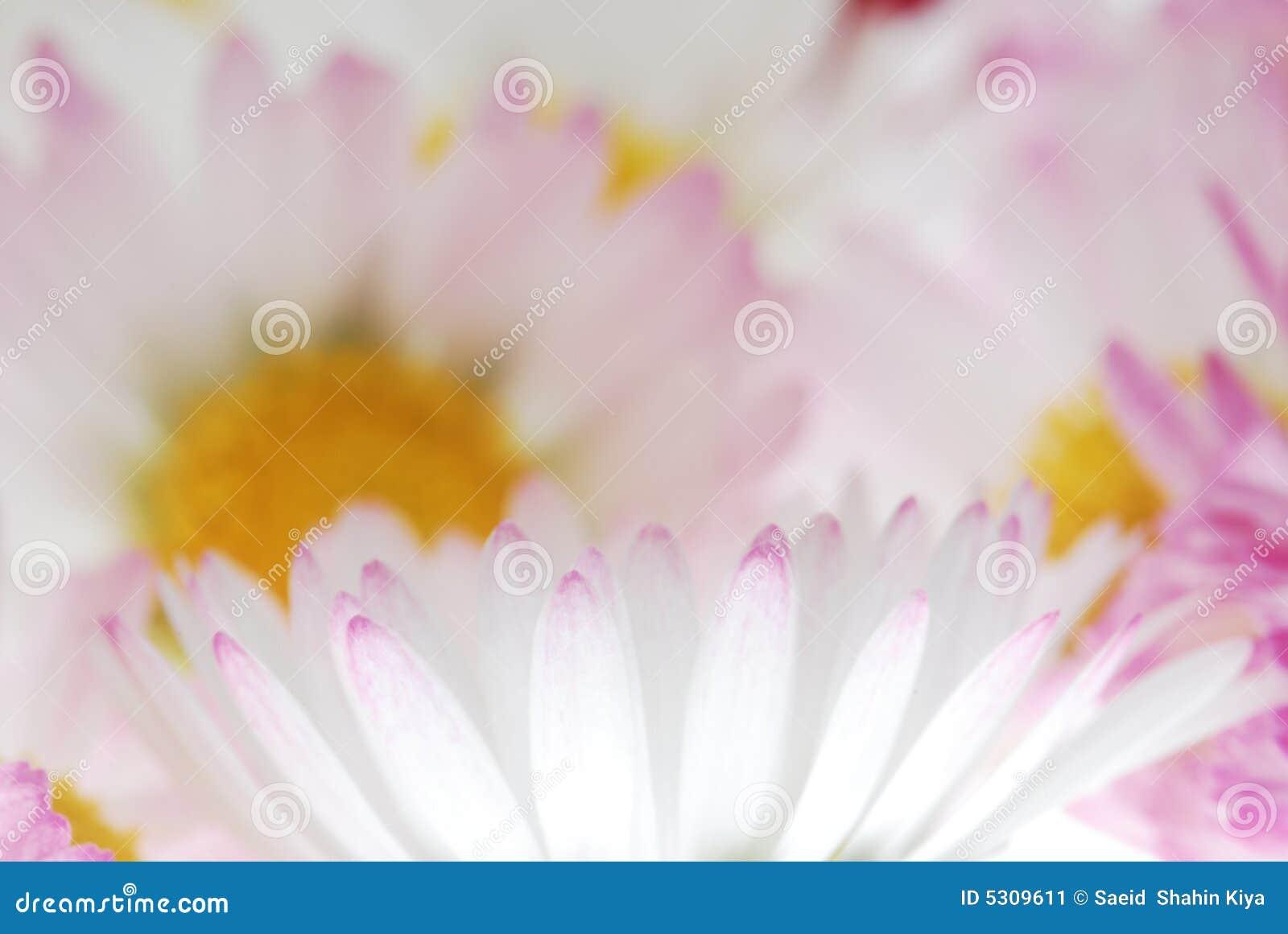 Download I Petali Del Fiore Si Chiudono In Su Immagine Stock - Immagine di rosso, colorful: 5309611