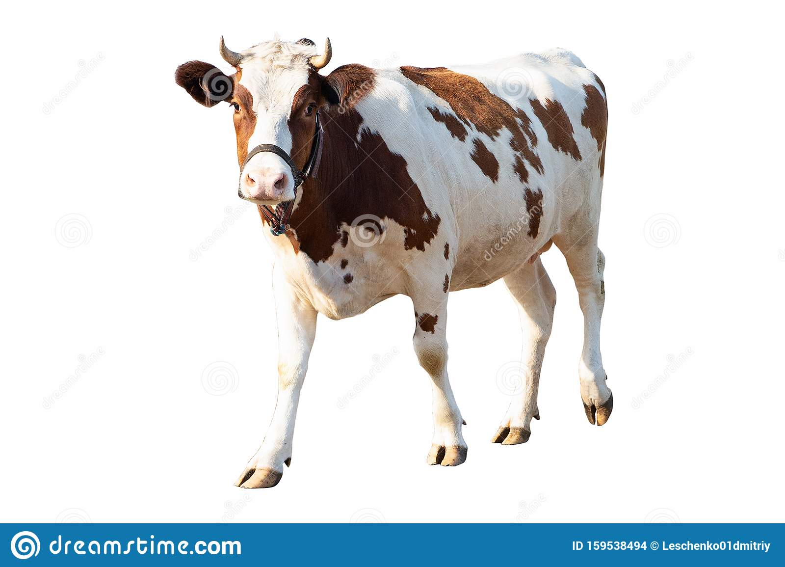 View Cow Background Pictures