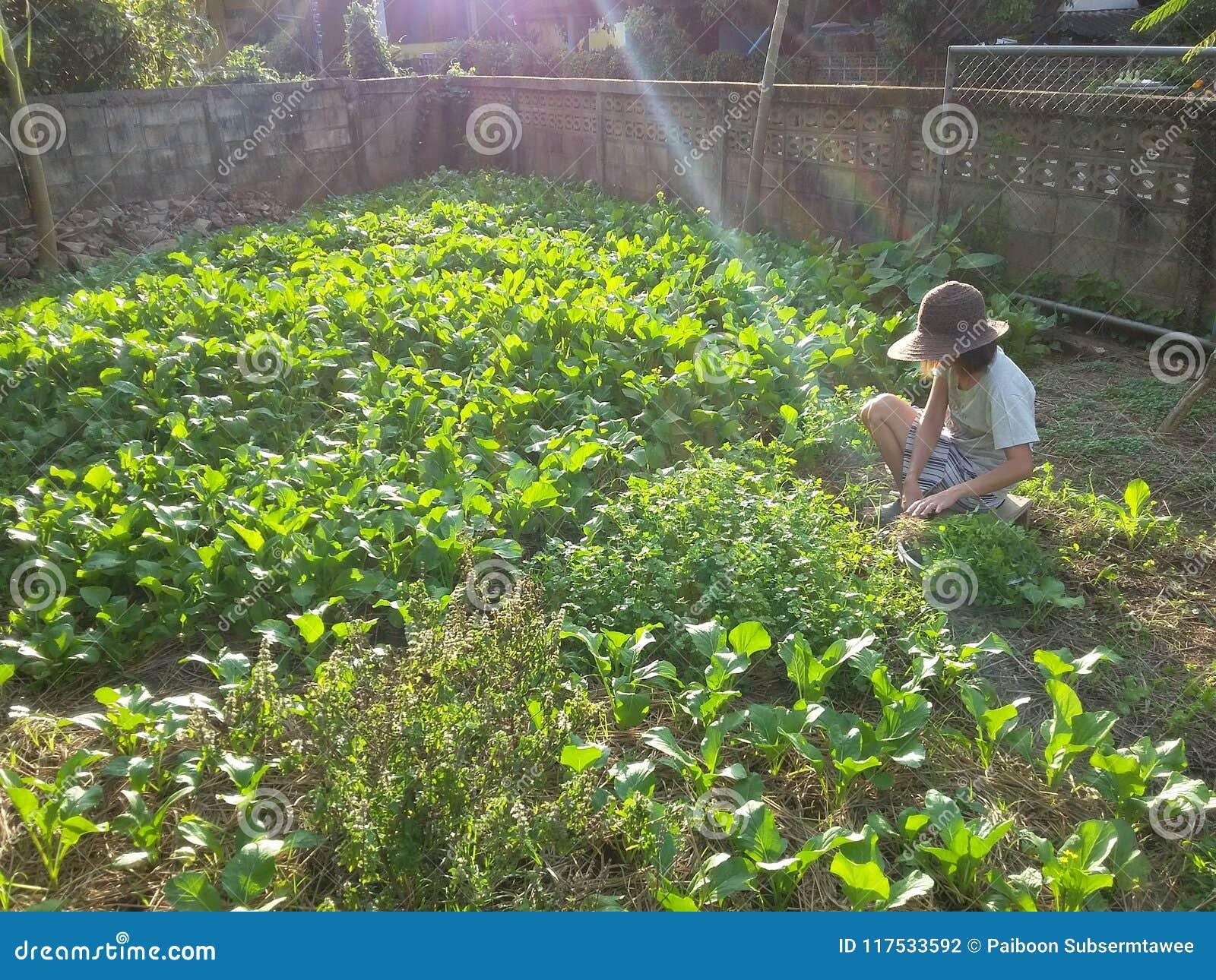 I raccolti agricoli