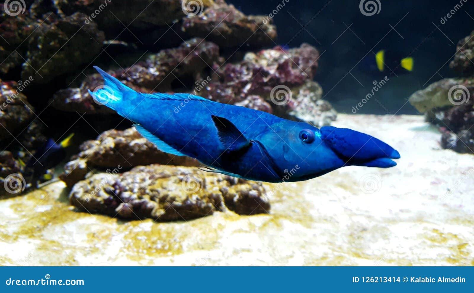Blue & x27;whale-penguin& x27; fish